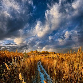 The Secret Way by Phil Koch - Landscapes Prairies, Meadows & Fields ( wisconsin, ray, fine art, travel, phil koch, leaves, landscape, sun, love, sky, tree, nature, autumn, path, bluesky, horizons, light, flower, clouds, park, twilight, horizon, morning, shadows, wild flowers, field, dawn, color, backlight, sunset, fall, outdoors, meadow, trees, landscapephotography, beam, sunrise, landscapes, floral, hike, mist )