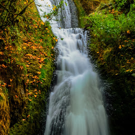 Fall colors are upon us. by Matt Lutjen - Novices Only Landscapes ( waterfalls, autumn, columbia gorge, fall, hiking )