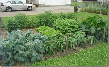 DSC00816 garden