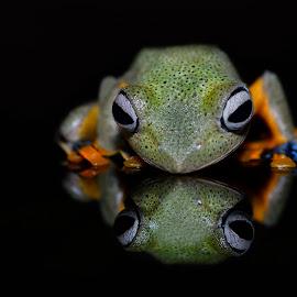 Twin by Ais Setiawan - Animals Amphibians ( macro, frog, amphibian, photography, animal )