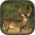 Free Whitetail Hunting Calls APK for Windows 8