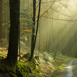 Swabian forests by Victor Mukherjee - Landscapes Travel ( jungle, sunrays, moss, path, trees, forest, road, morning, light )