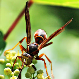 by Joyce Williams Carr - Animals Insects & Spiders ( Urban, City, Lifestyle )