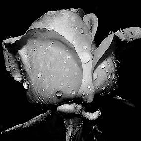 by JOEL Graphuchin - Black & White Flowers & Plants