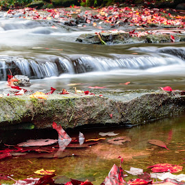 Fall Water by Michelle Nolan - Landscapes Waterscapes ( water, west virgina, fall, water falls, bobcack state park )