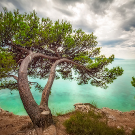 Alone Tree by Nermin Smajić - Nature Up Close Trees & Bushes ( water, sky, tree, waterscape, dramatic, sea )