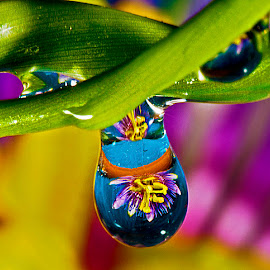 Dripping drop with passion flower by David Winchester - Nature Up Close Natural Waterdrops