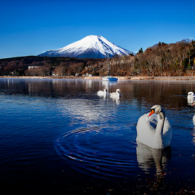 Swan in Blue Lake by Nyoman Sundra - Landscapes Mountains & Hills ( mountain, yamanashi, fuji, yamanaka, lake )