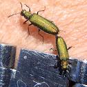 Escarabajo metalizado