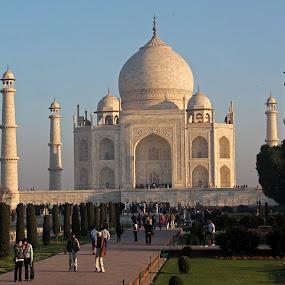 Morning Taj by Srivenkata Subramanian - Buildings & Architecture Statues & Monuments ( love symbol, taj mahal, agra, wonder of the world, india, beauty, white marble,  )