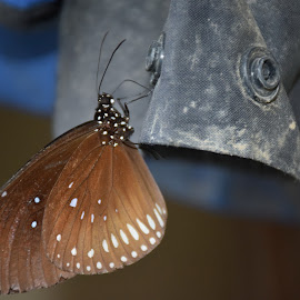 Butterfly by L L's - Animals Other ( butterfly, bug, animal,  )