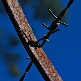 wired metal  by Magdalena Wysoczanska - Artistic Objects Other Objects ( fence, rod, blue sky, wire, metal, rusted )