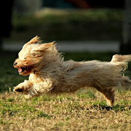 Running dog by Alessandra Cassola - Animals - Dogs Running ( #dog, #animal, #running dog )
