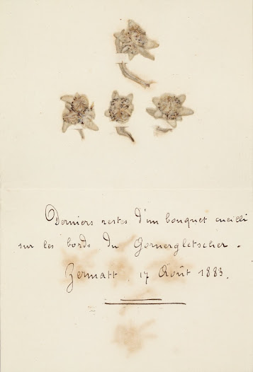 Flowers picked by Henri La Fontaine during a trip on the Gorner glacier (Switzerland) in 1883