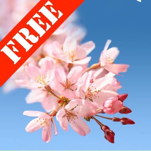 Sakura Free Live Wallpaper