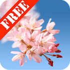 Sakura Free Live Wallpaper icon
