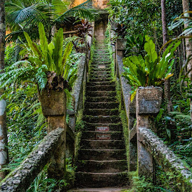 In the jungle by Vibeke Friis - Buildings & Architecture Public & Historical ( stairs, paronella, concrete,  )