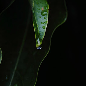 Rain drop on a leaf by Ram Seth - Nature Up Close Leaves & Grasses ( nature, silhouette, leaf, rain drop, renewal, green, trees, forests, natural, scenic, relaxing, meditation, the mood factory, mood, emotions, jade, revive, inspirational, earthly,  )