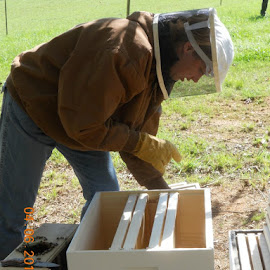 I get to put the second hive together by Lisa Whitfield - Novices Only Portraits & People
