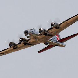 B-17 by Gary Chambers - Transportation Airplanes