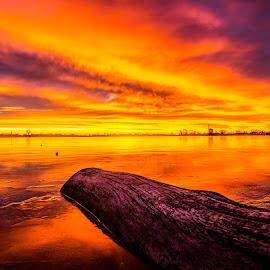 Frozen in Time by Norris Gammeter - Landscapes Sunsets & Sunrises