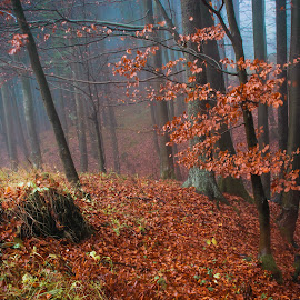 Bad weather in the forest by Nina Lishchuk - Landscapes Forests ( hill, autumn, fog, red leaves, forest, rain )