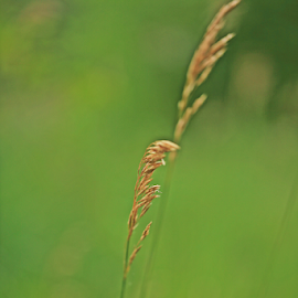 by Kevin Callahan - Nature Up Close Leaves & Grasses