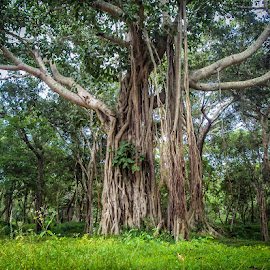 by Rasika Waranasuriya - Landscapes Forests