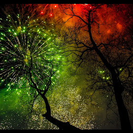Firework trees by Stephanie Örjas - Abstract Fire & Fireworks ( sweden, color, tradition, trees, fireworks, festivities )