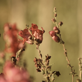 Sunset flower by Katarina Vrhovac - Nature Up Close Leaves & Grasses ( red, nature, grass, green, pink, leaves, flower )