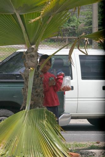 TRABAJO INFANTIL. Menores de edad permanecen atentos a la señal de alto del Centro de Convenciones y Ferias para poder vender sus productos. Es normal ver en las calles de San Salvador a menores de edad ganándose el sustento diario, algunas veces sus padres o familiares no trabajan y dependen de la venta que los menores realizan. Foto de La Prensa, josé Cardona