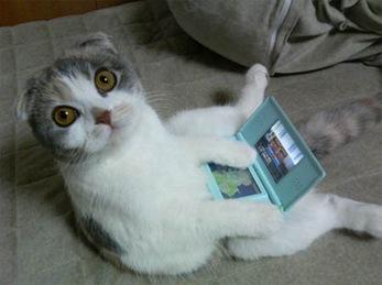 cat-ds