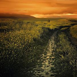 by Силвия Георгиева - Landscapes Prairies, Meadows & Fields