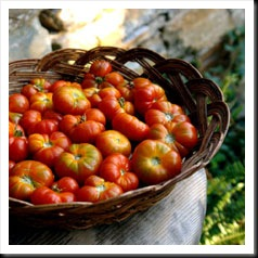 tomato-ingredient-(3)_218