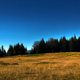 meadow in autumn by Emina Dedić - Instagram & Mobile Other ( blue sky, sky, fall colors, blue, grass, autumn, fall, meadow, autumn colours, forest, autumn colors, woods )