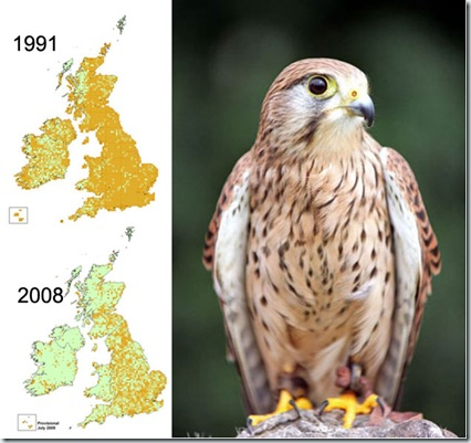 kestrel-map_46598a