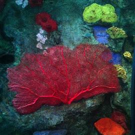 Coral by Kaylee Shaw - Landscapes Underwater ( coral, underwater, colorful, aquarium, ocean )
