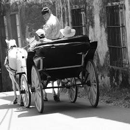PASSEIO DE CHARRETE by Márcio José - Transportation Other ( preto e branco, luz natural, sintra, fotografia, pessoas, cavalos, márcio josé, portugal, charrete )