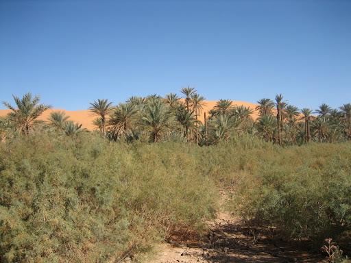 صور بني عباس بولاية بشار جنوب الجزائر Photo%20desert%20tunisie%20076