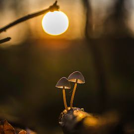 Under the street light by Mark Ferguson - Nature Up Close Mushrooms & Fungi ( mushroom, ireland, fungi )