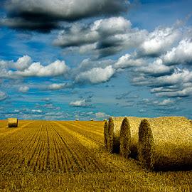 Balas de paja by Eduardo Menendez Mejia - Landscapes Prairies, Meadows & Fields ( uk, paja, tokina 12-24, balas, cambridgeshire, menendez, eduardo, nikon, cambridge, d5100, inglaterra )