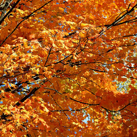 Greenville SC by Michael Griffin - City,  Street & Park  Vistas ( fall leaves, hometown, autumn leaves, colors, fall color )