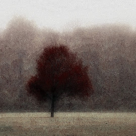 n  a  t  u  r  eAlberto Clapis Photography by Alberto Clapis - Digital Art Abstract ( rosso, nature, tree, color, digital )