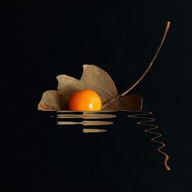 Leaf on water by Prasanta Das - Digital Art Things ( water, reflection, leaf )