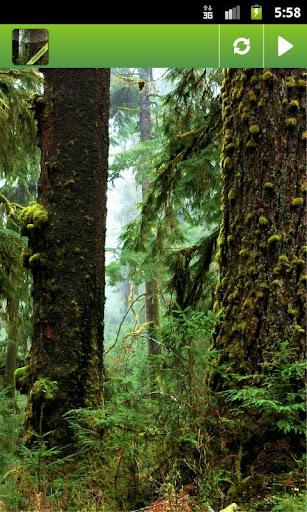 Rainforest. White Noise