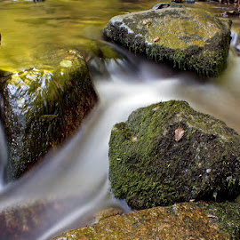 by Siniša Almaši - Nature Up Close Water ( up close, stream, nature, stone, forest, rock )