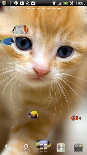 海水熱帯魚たちと子猫★LIVE壁紙