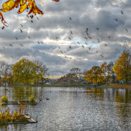Chesham Lido by Stephen Lodge - City,  Street & Park  City Parks ( sky, lido, trees, reflections, nikon, clarence park, birds, chesham )