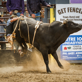 How not to ride a bull by Gary Beresford - Sports & Fitness Other Sports ( cowboy, buck, rodeo, bull )