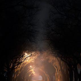 An eerie night by Aj Nelson - City,  Street & Park  Night ( , golden hour, sunset, sunrise )